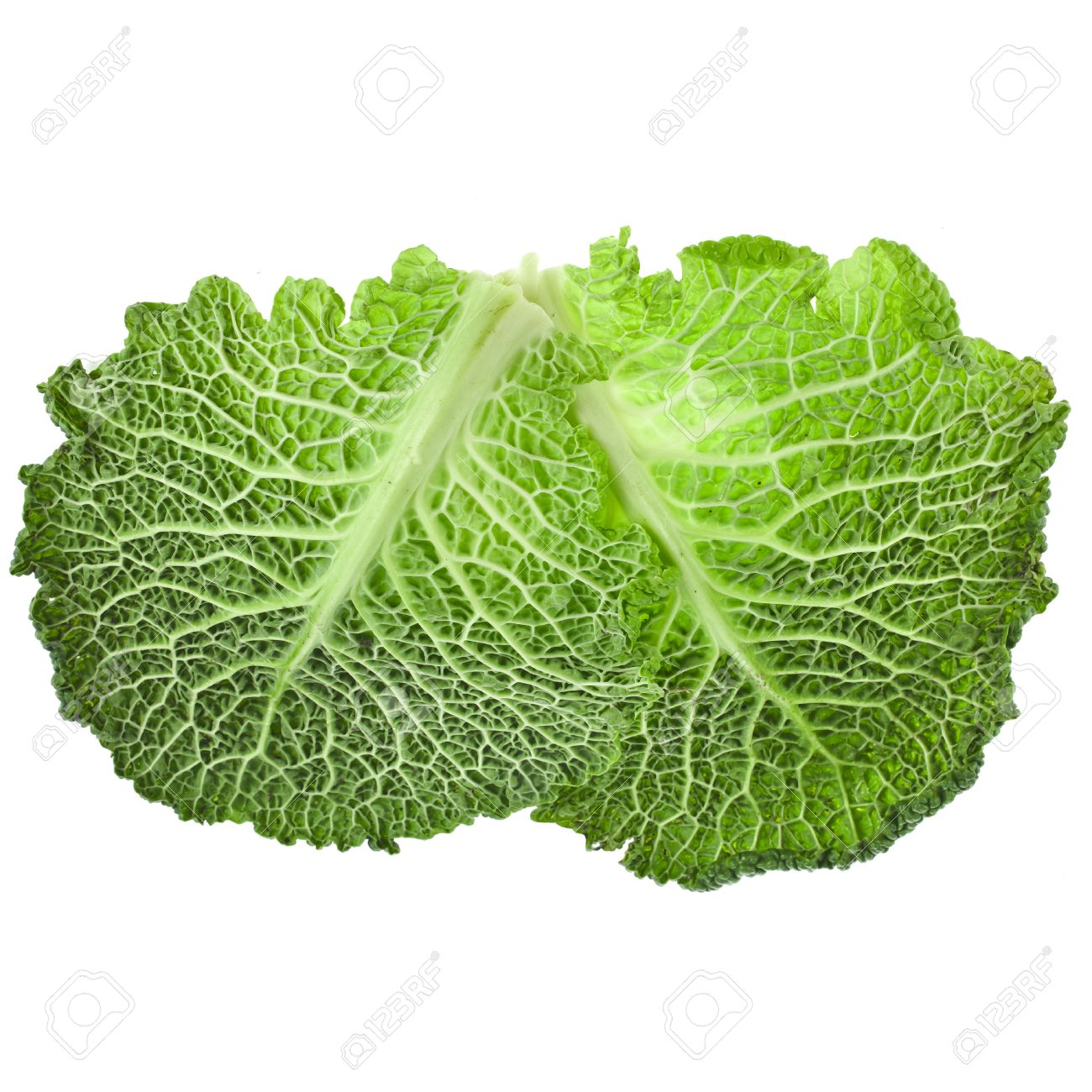 Savoy Cabbage Leaf Texture Isolated On White Background Stock Photo Picture And Royalty Free Image Image 18844129