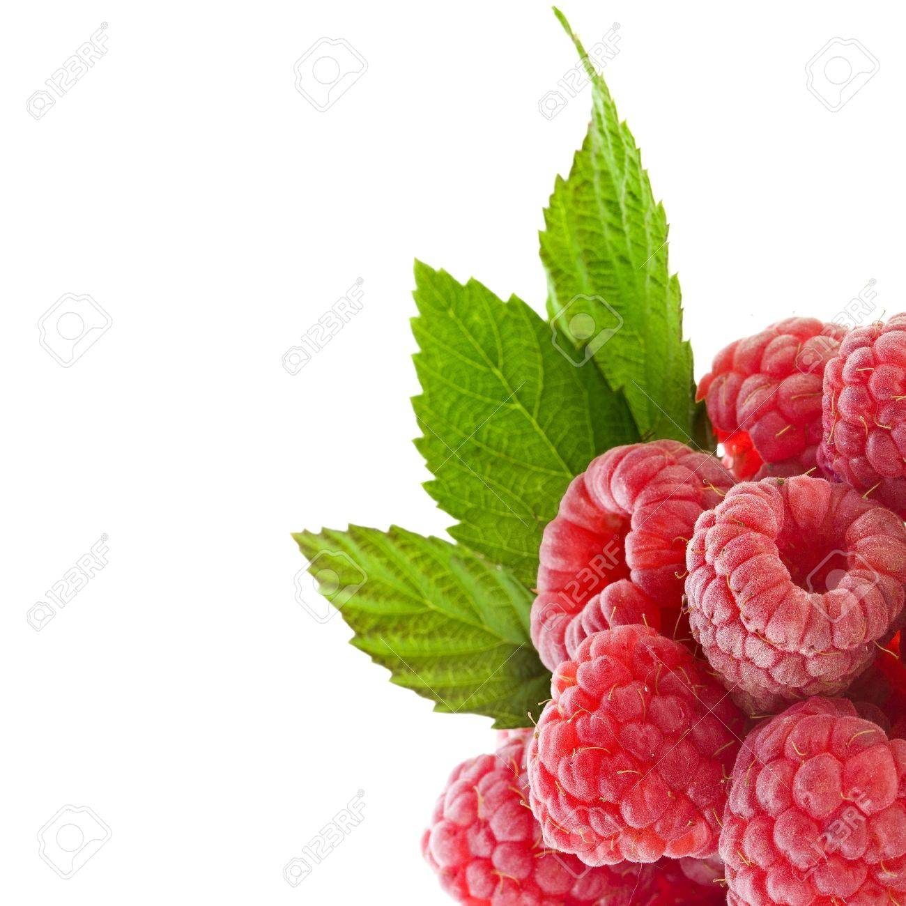 Corner Border Of Ripe Raspberry With Green Leaves Close Up ...