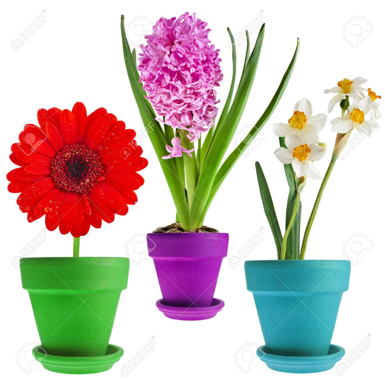 Collection set of spring flower bouquet potted isolated on white collection set of spring flower bouquet potted isolated on white background stock photo 29436206 mightylinksfo