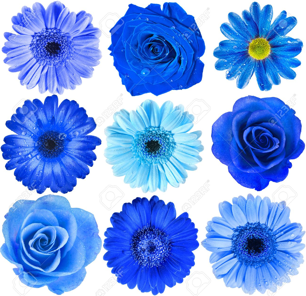 Blue flower stock photos royalty free blue flower images various blue flowers head top view close up selection isolated on white background izmirmasajfo Image collections