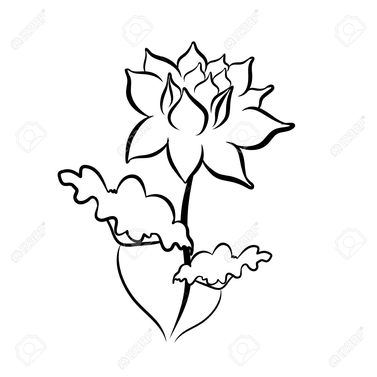 Sketch Line Drawing Of Lotus Flower Isolated Illustration On