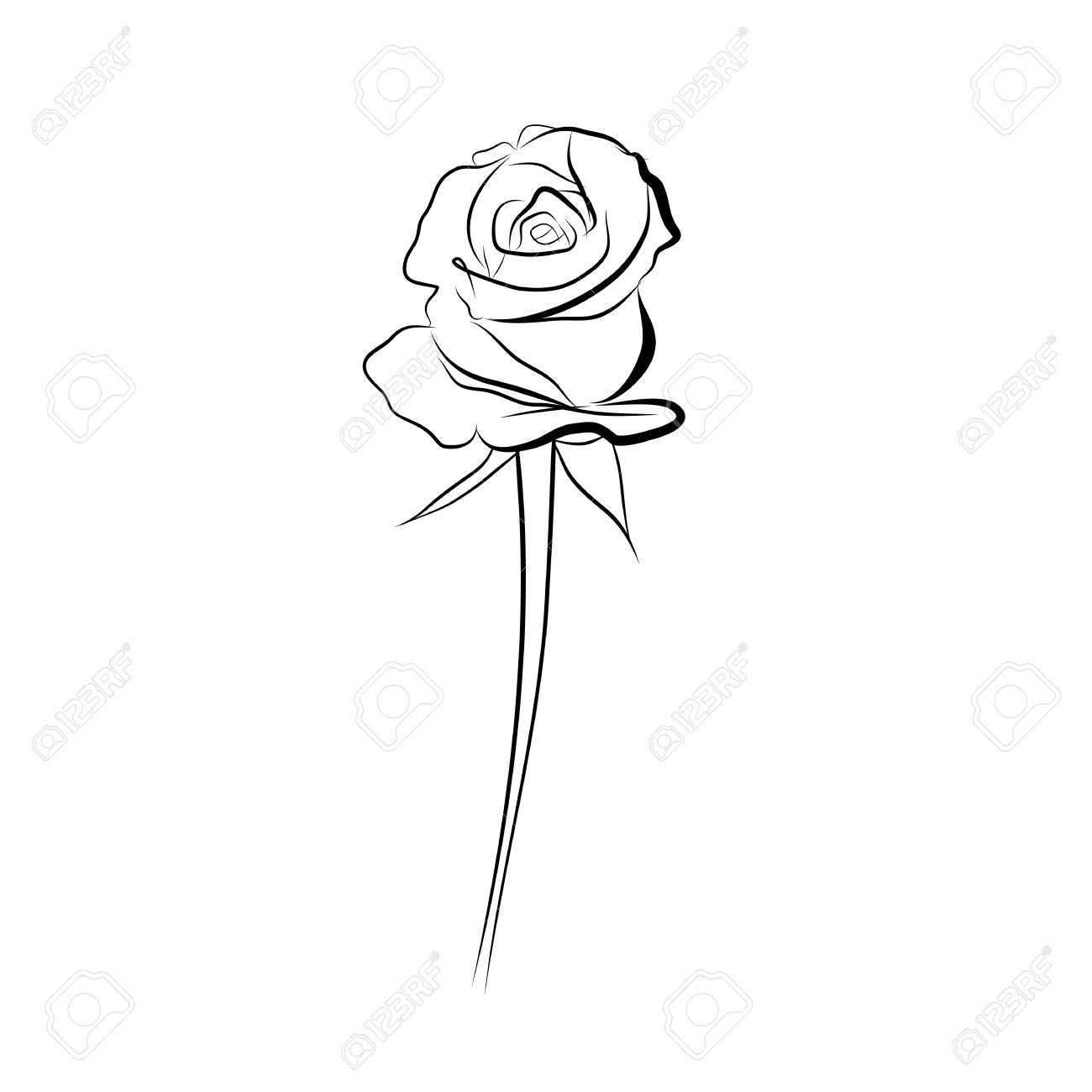 sketch line drawing of rose isolated illustration on white