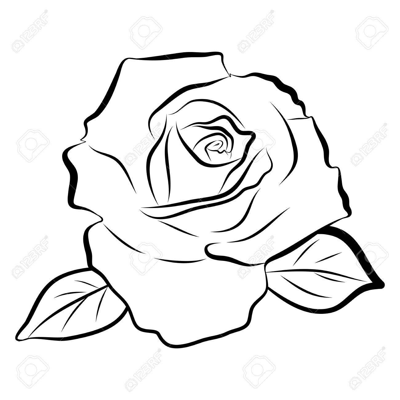 Dessin Au Trait Croquis De Rose Illustration Isolé Sur Fond Blanc