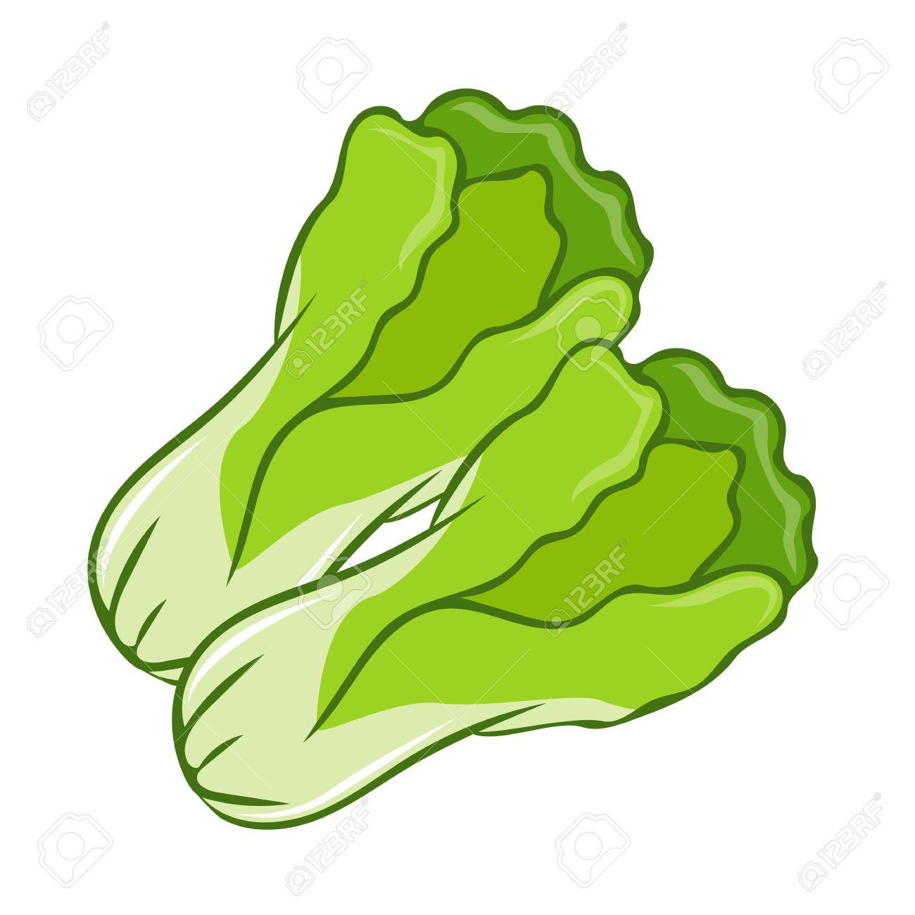 Green Lettuce cartoon isolated illustration on white background Stock Vector - 41528748