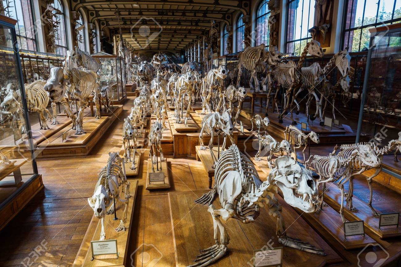 Paris, France - October 16, 2016: Skeletons Of Animals In The ...