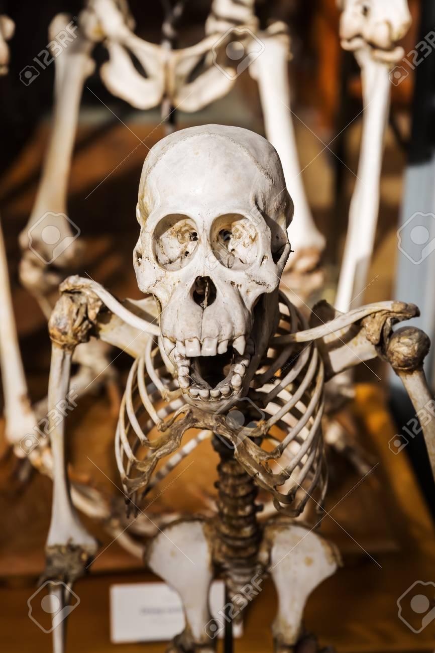 Paris, Frankreich - 16. Oktober 2016: Skelette Von Tieren In Der ...