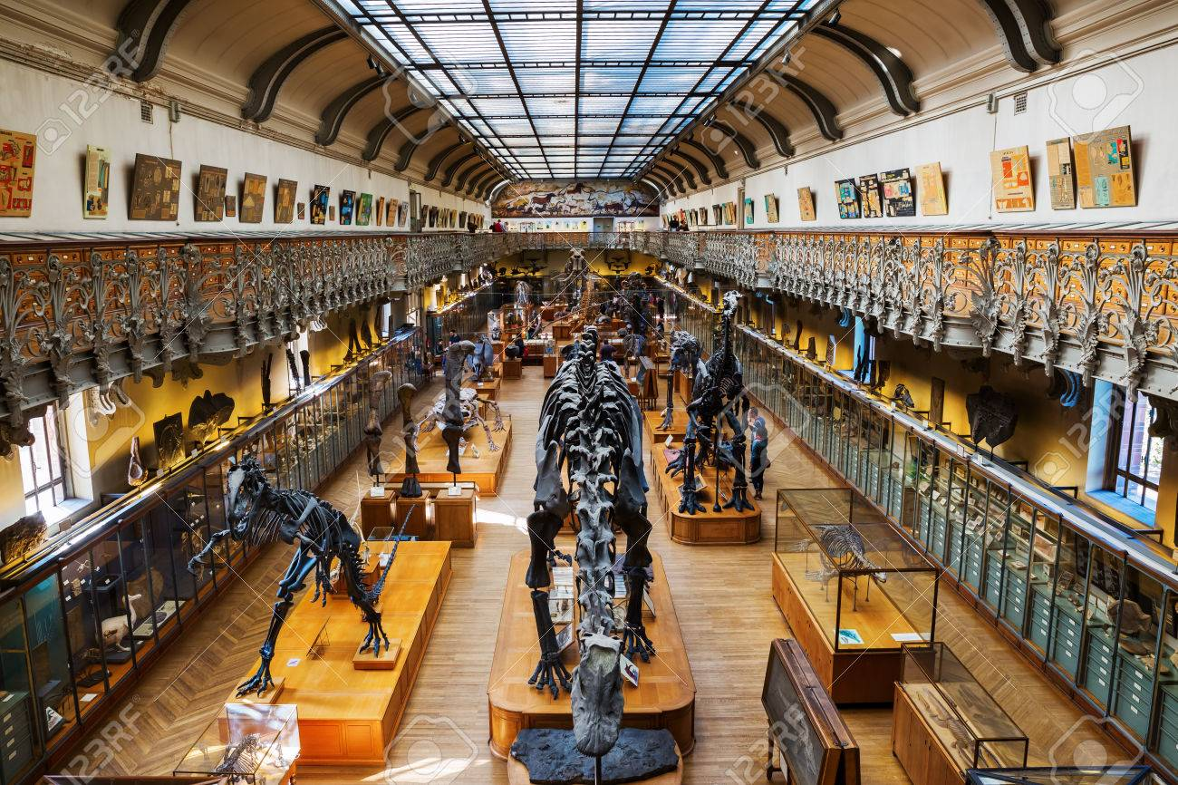 Skelette Von Tieren In Der Galerie Der Paläontologie Und ...