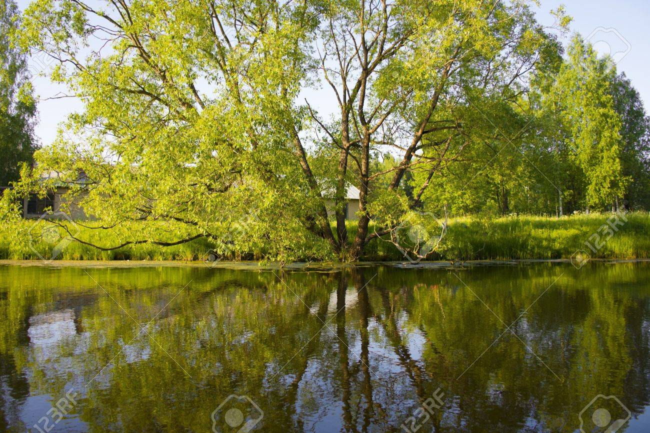 のどかな田舎の風景 自然水の近くの美しい花 壁紙の背景 自然の
