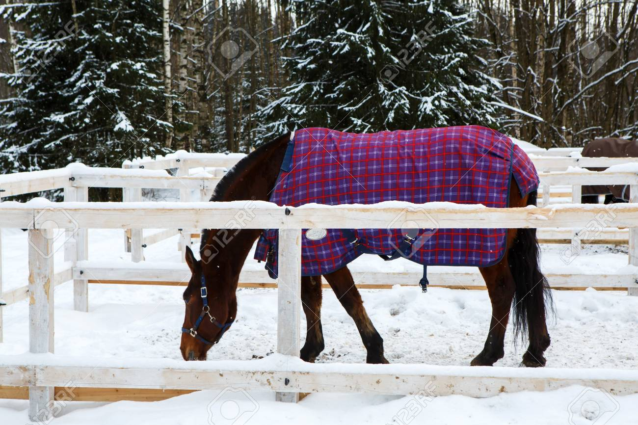 Winter Horse Blankets >> Horse Winter Blankets