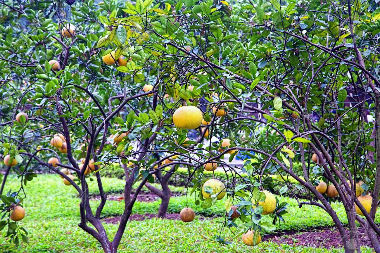 Bloomy orange garden