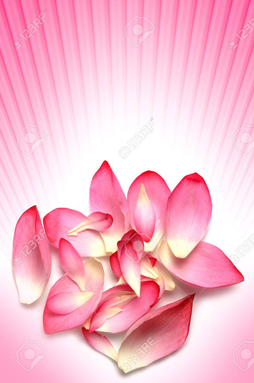 Real Lotus Flower Petals With Pink Rays Background Stock Photo