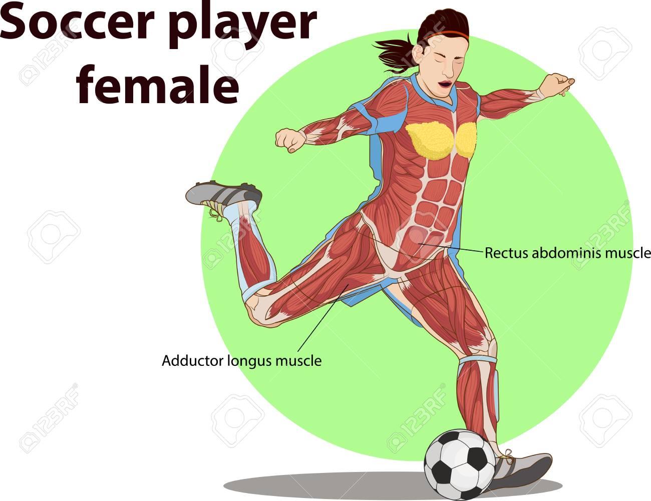 Vektor-Illustration Der Fußball-Spieler Muskel Anatomie Lizenzfrei ...