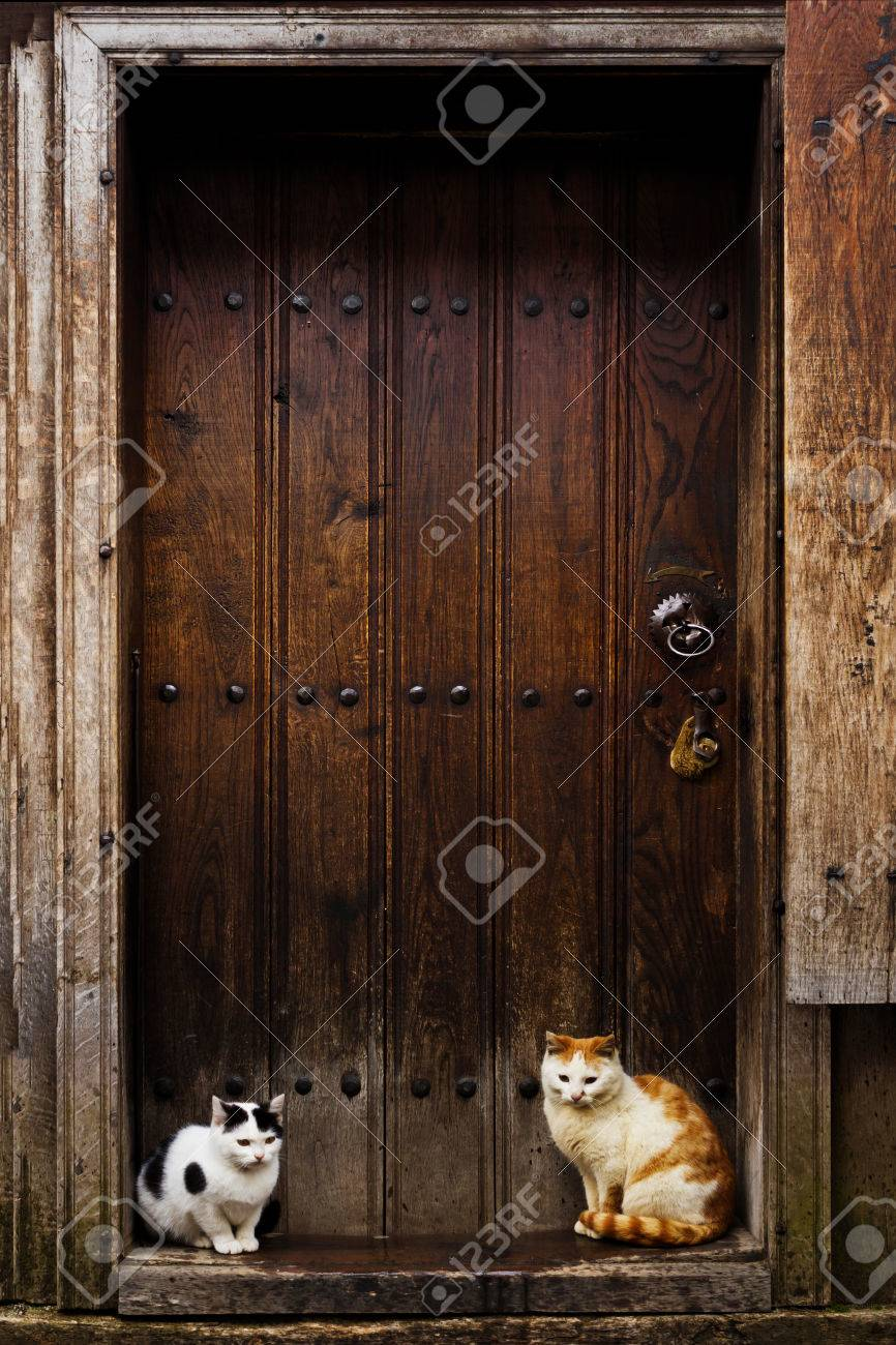 Cats Waiting To Go Inside Cats Sitting By A Barn Door Stock Photo   30452569
