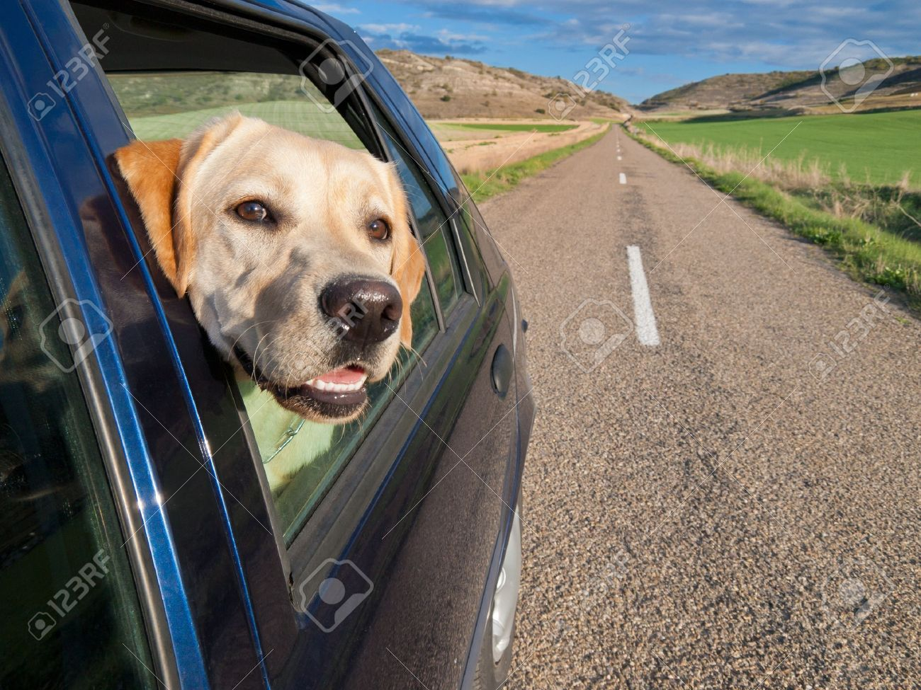 dog poking his head out the window of a car in a long road. Stock Photo - 14309069