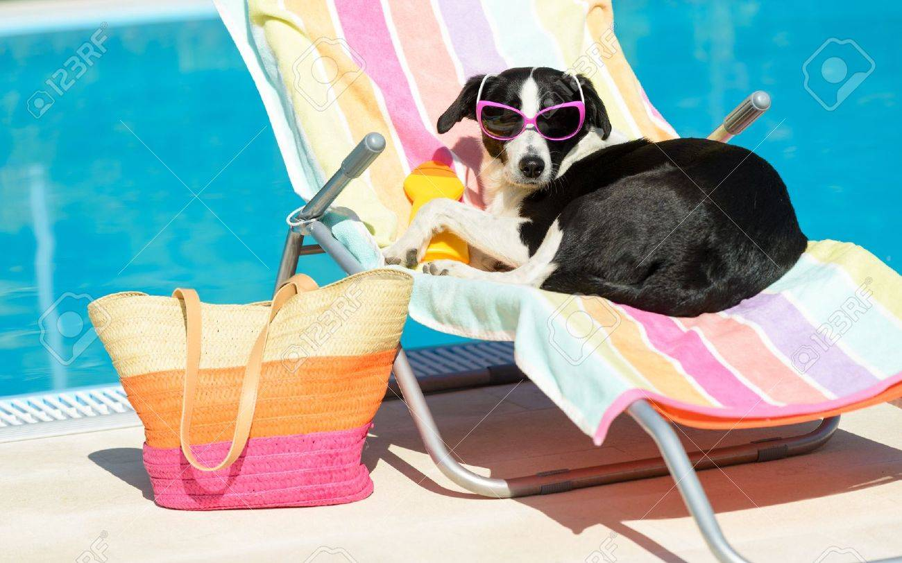 Funny Female Dog Sunbathing On Summer Vacation Wearing Sunglasses Pet Relaxing A Hammock At Swimming