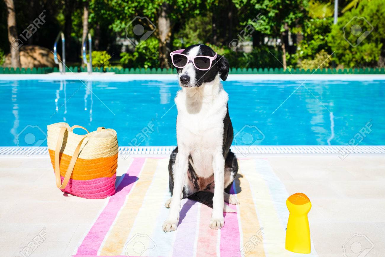 Funny Dog Wearing Sunglasses On Summer Vacation At Swimming Pool Stock Photo