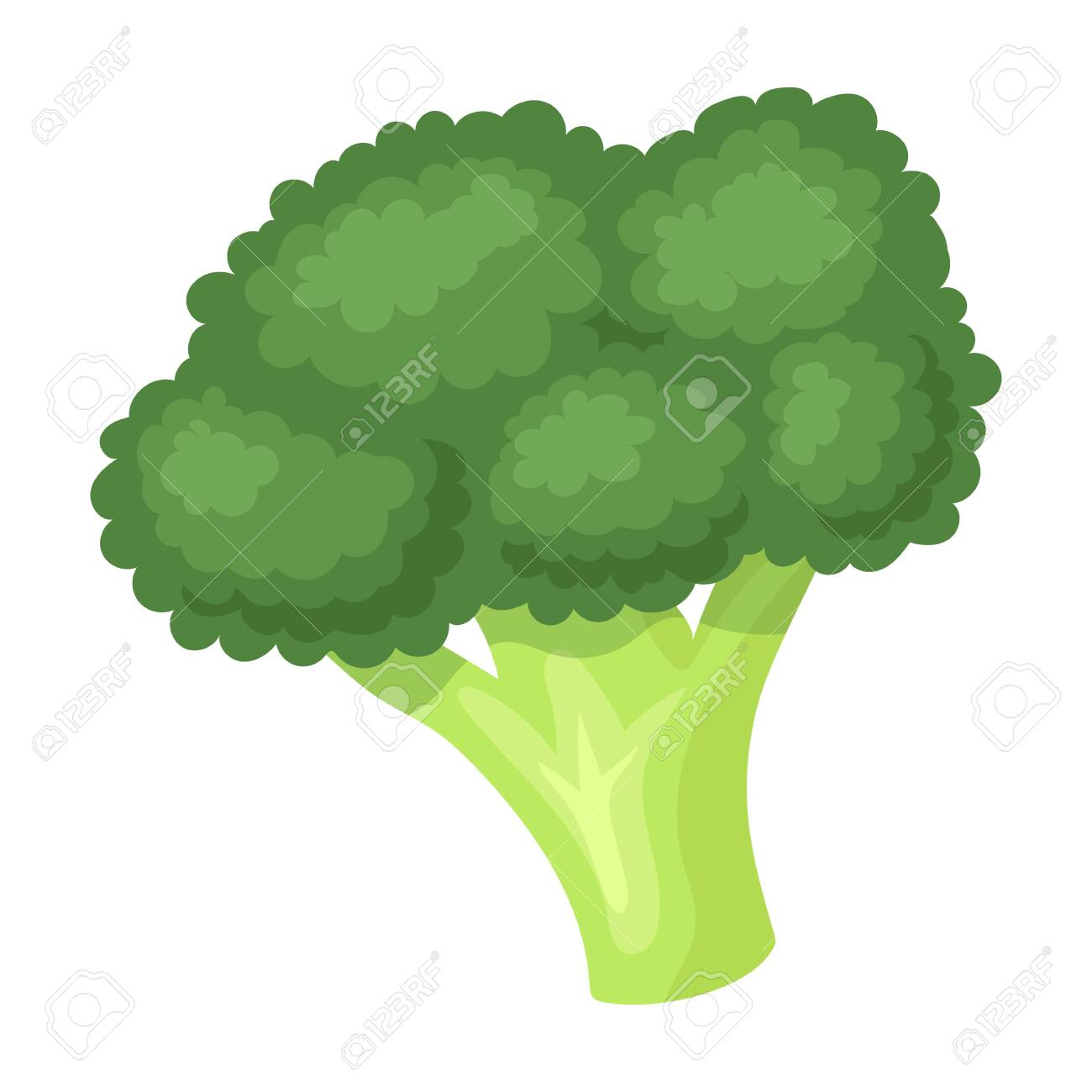 broccoli vector icon cartoon vector icon isolated on white background royalty free cliparts vectors and stock illustration image 147158564 123rf com