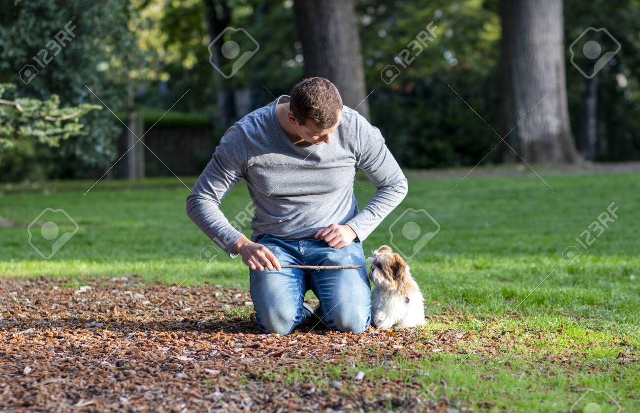 Man Playing With Shih Tzu Puppy Outdoors A Dog Training In The Stock Photo Picture And Royalty Free Image Image 135082834