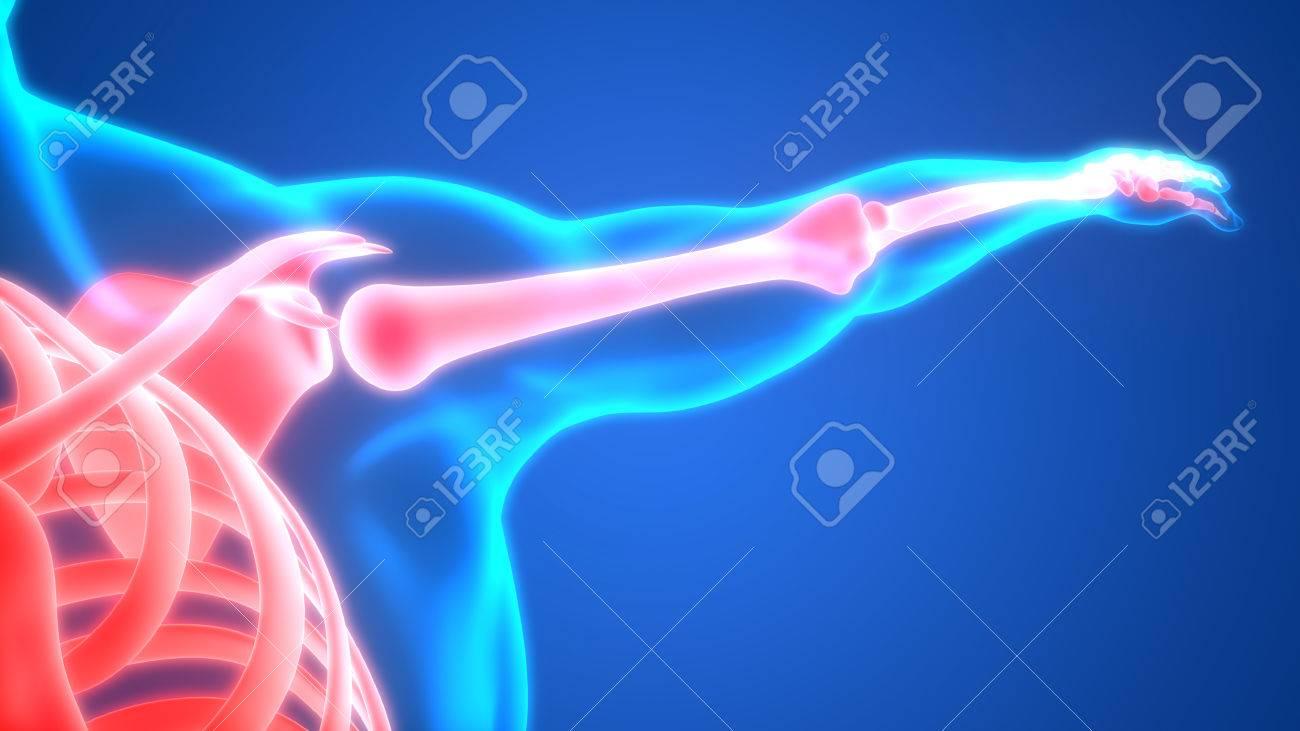 Menschlicher Körper Knochen Gelenkschmerzen Anatomie (Hand Gelenke ...