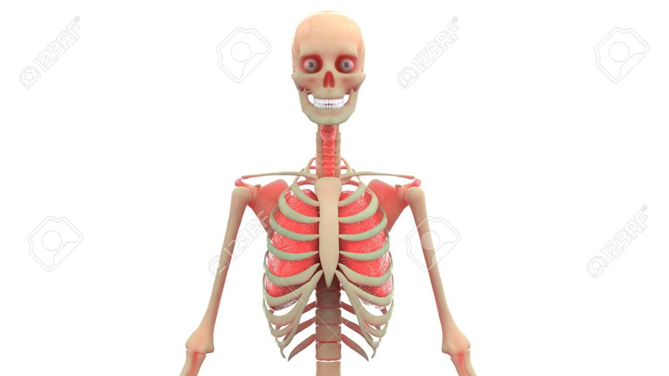 Nett Lungen Anatomie Fotos - Anatomie Ideen - finotti.info