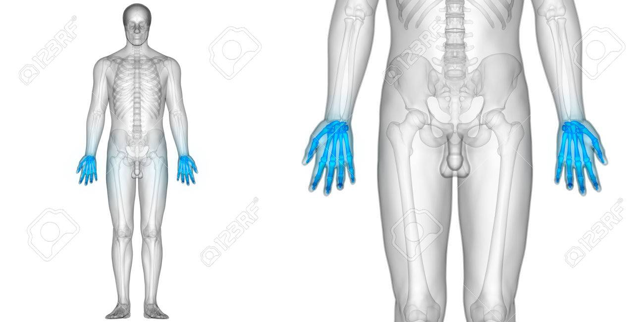 Human Body Bone Joint Pains Anatomy (Finger Joints) Stock Photo ...