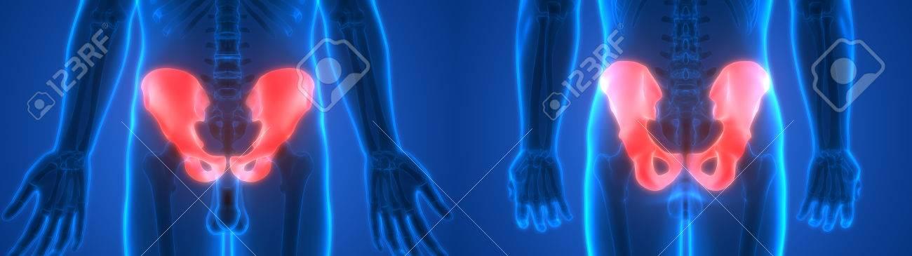 Menschlicher Körper Knochen Gelenk Schmerzen Anatomie (Hip ...