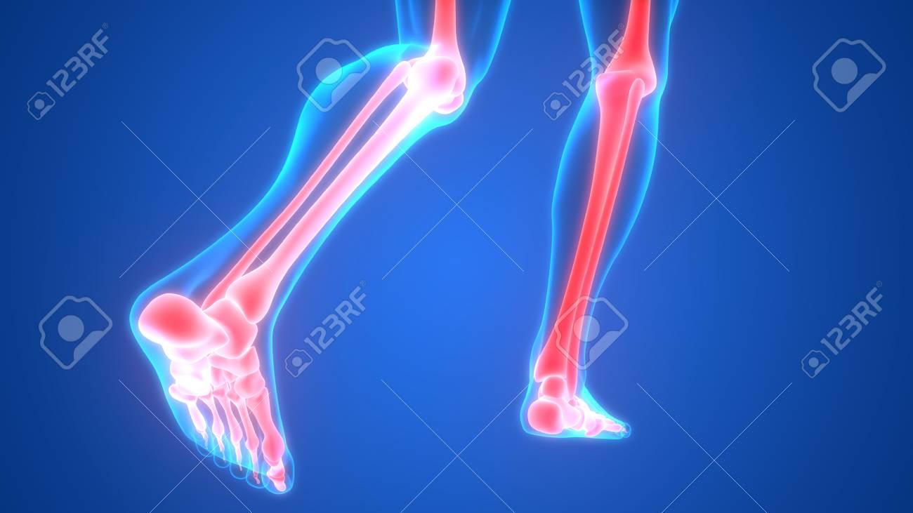 Anatomía De Los Dolores En Las Articulaciones Del Hueso Del Cuerpo ...