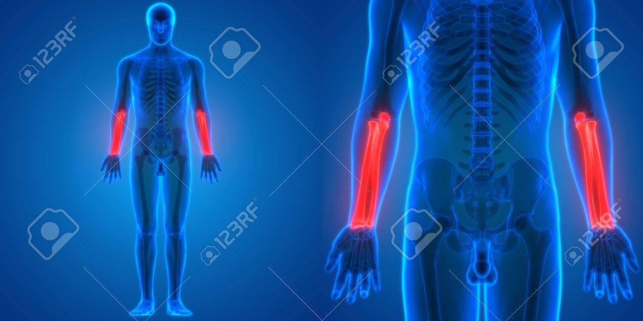 3D Abbildung Der Menschlichen Körper Knochen Gelenk Schmerzen ...