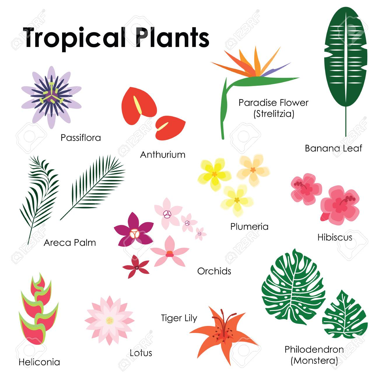 vector illustration / tropical plants pictures with names / palm