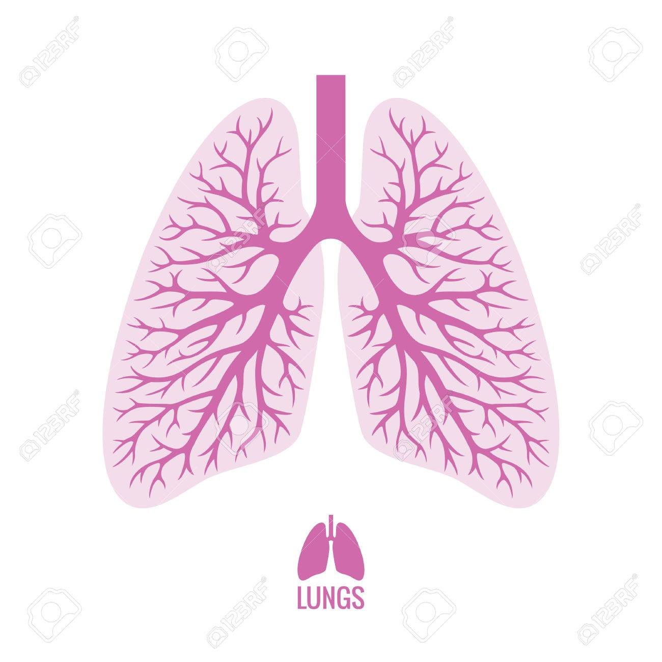 Human Lungs With Bronchial Tree Royalty Free Cliparts, Vectors, And ...