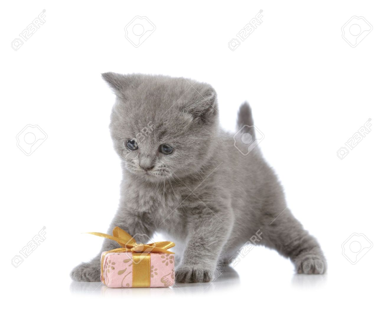 Кошачье поздравление с днём рождения