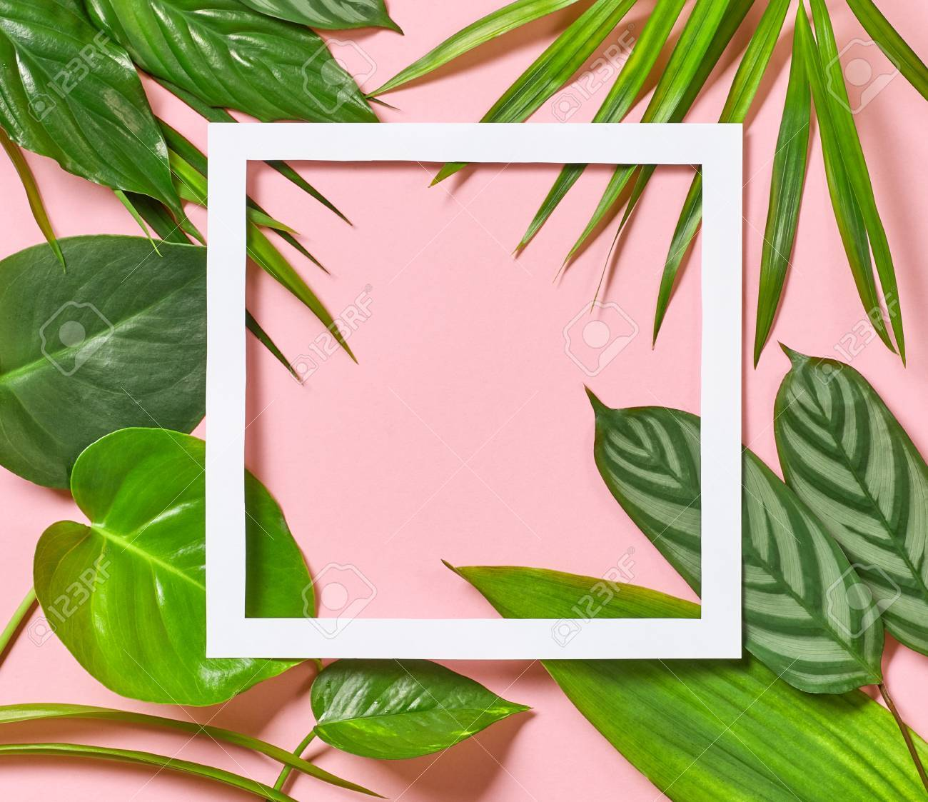 Tropical Leaves And White Frame On Pink Background Top View Stock Photo Picture And Royalty Free Image Image 89143586 How to credit on printed materials? tropical leaves and white frame on pink background top view