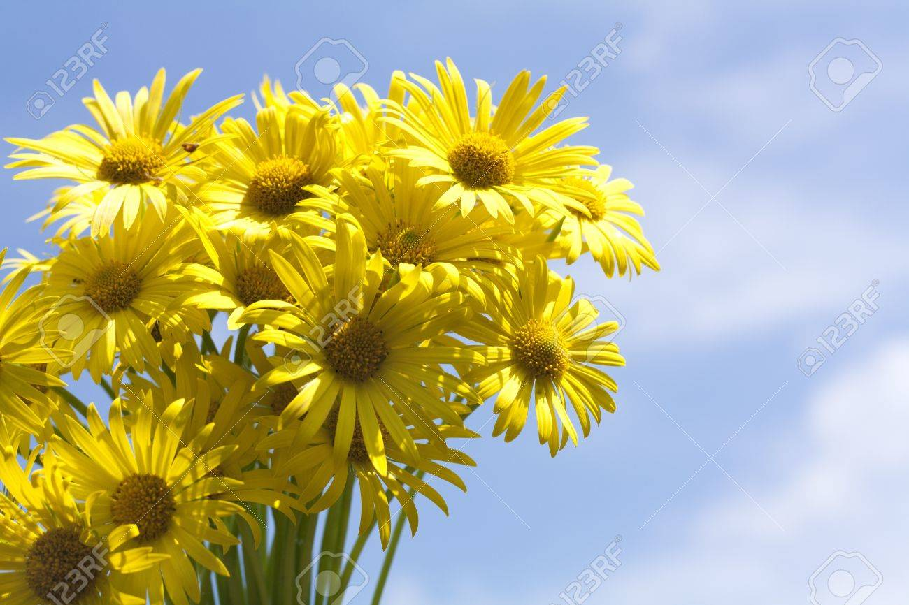 Bouquet of yellow aster flowers against blue sky stock photo bouquet of yellow aster flowers against blue sky stock photo 9445410 dhlflorist Gallery