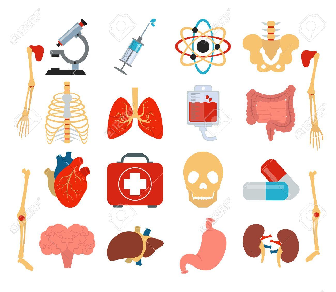 Stock Vector Medicina Anatomía Icono Conjunto Plana Ilustraciones ...