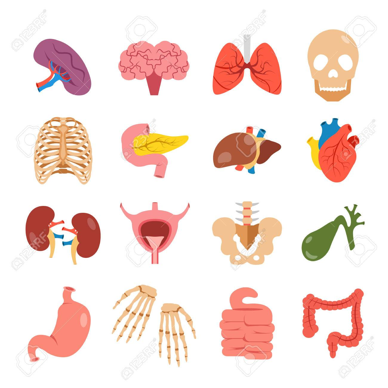 Human Organs Set. Modern Concepts. Bones And Internal Organs ...
