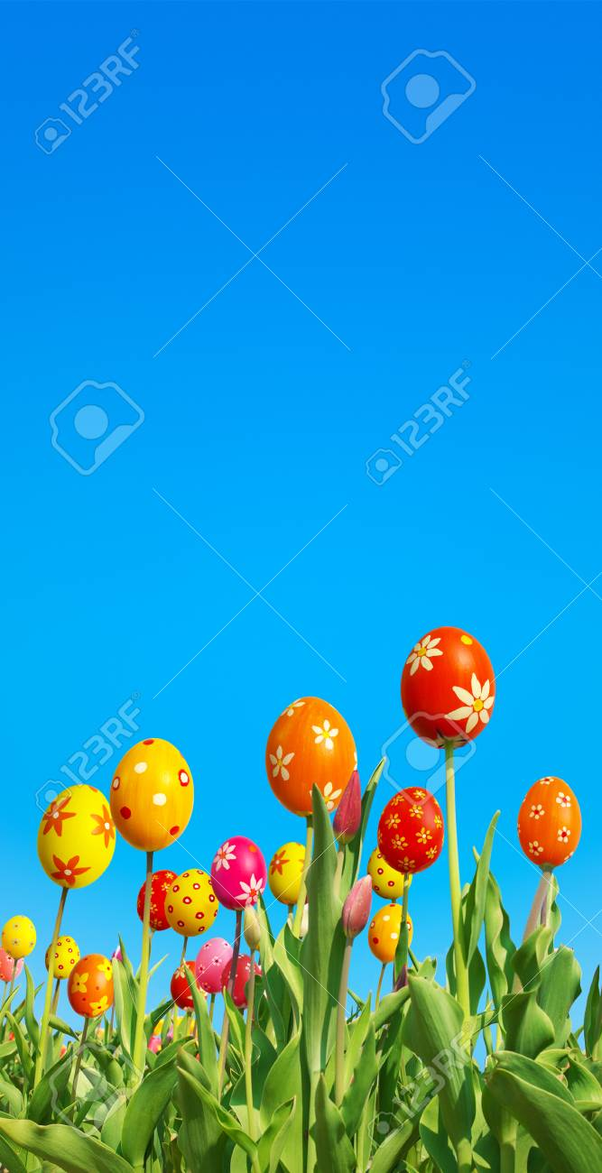 Special breeding of Easter tulips; Tulips with extraordinary flowerheads against clear blue sky - 54875140