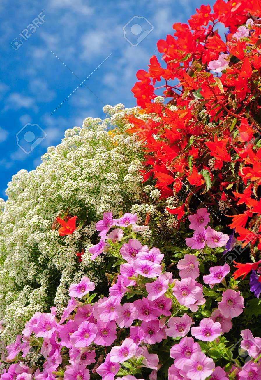 Rosa Rote Und Weisse Blumen Balkon Uppige Bluhende Blumen Bunte