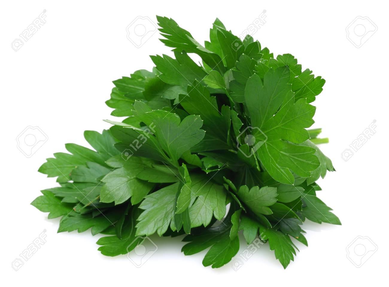 Fresh parsley isolated on white background - 115718360