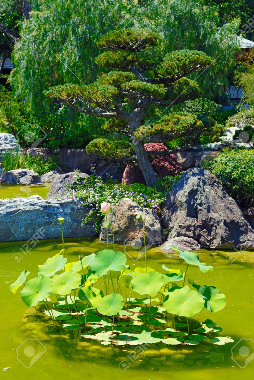 Beautiful garden with pond Stock Photo - 4467490