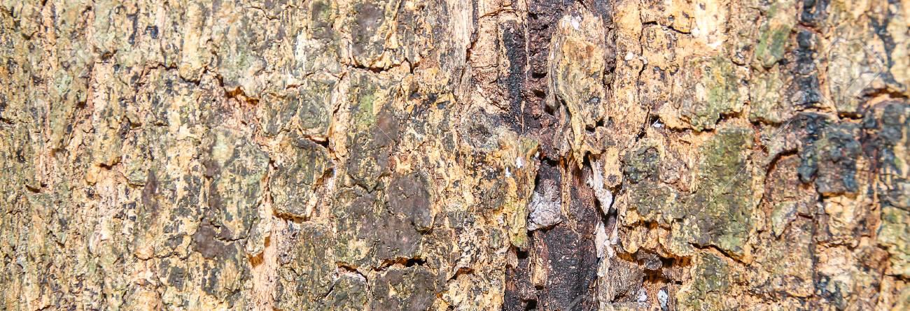 Holzboden Für Ein Hintergrundbild. Standard Bild   36487695