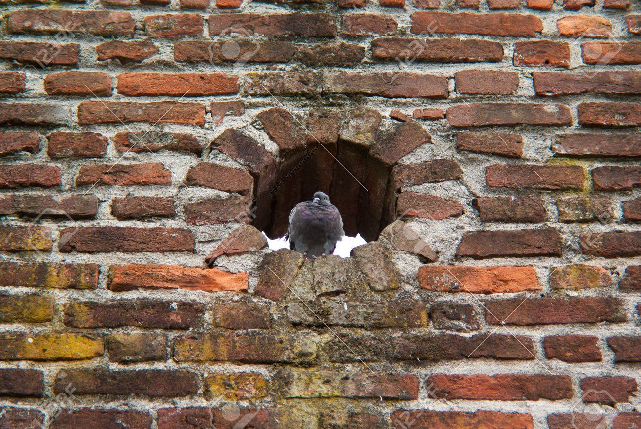 a pigeon in a hole in the wall of an ancient medieval castle during a party Stock Photo - 7983103
