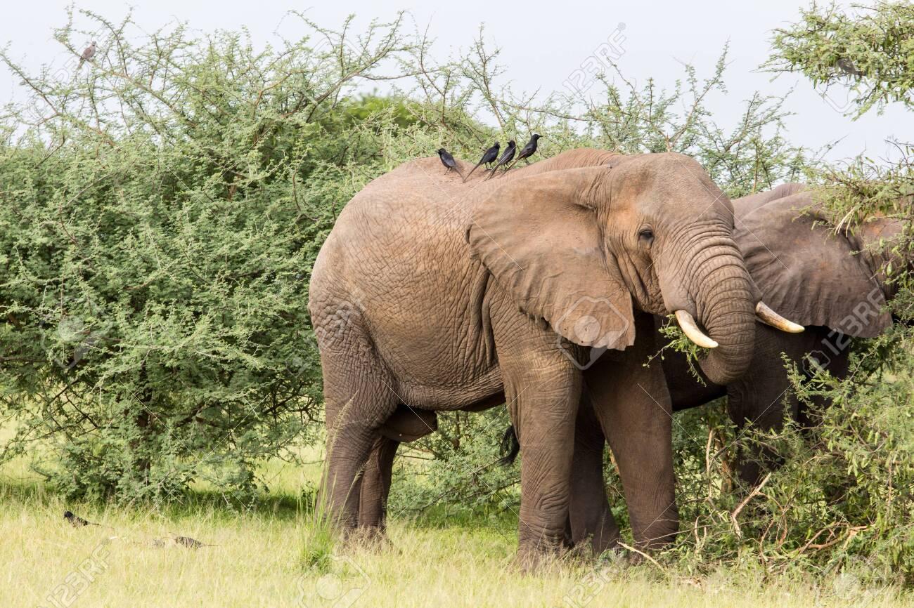 Elephant - 123499648