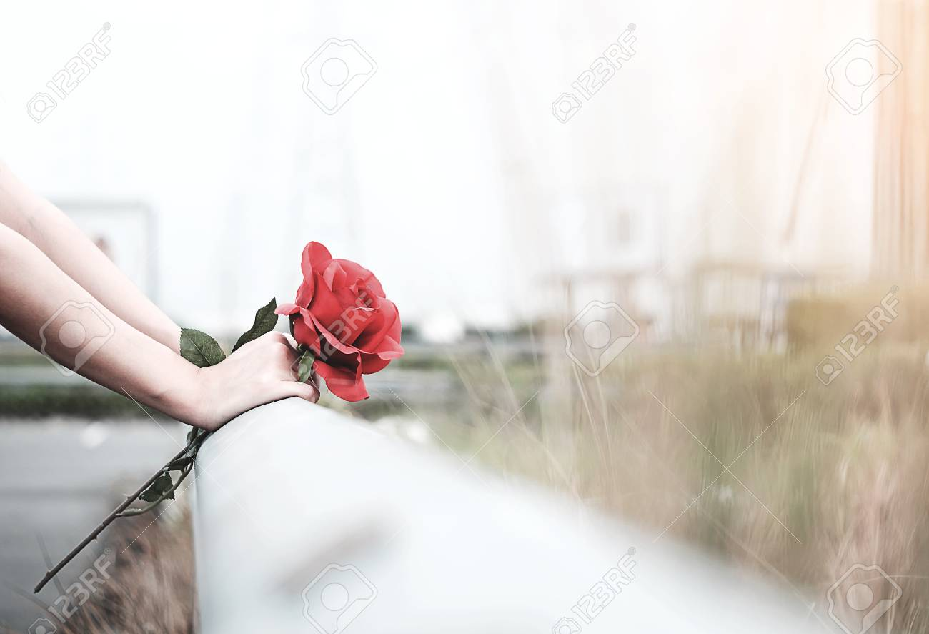 The Girl Sitting Holding A Red Rose In Her Hand Waiting For Stock
