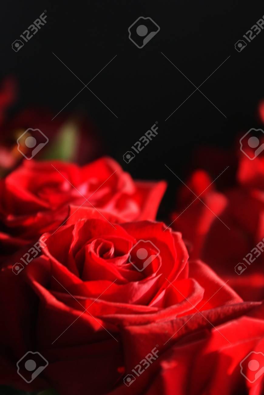 Roses on black background Stock Photo - 12636450