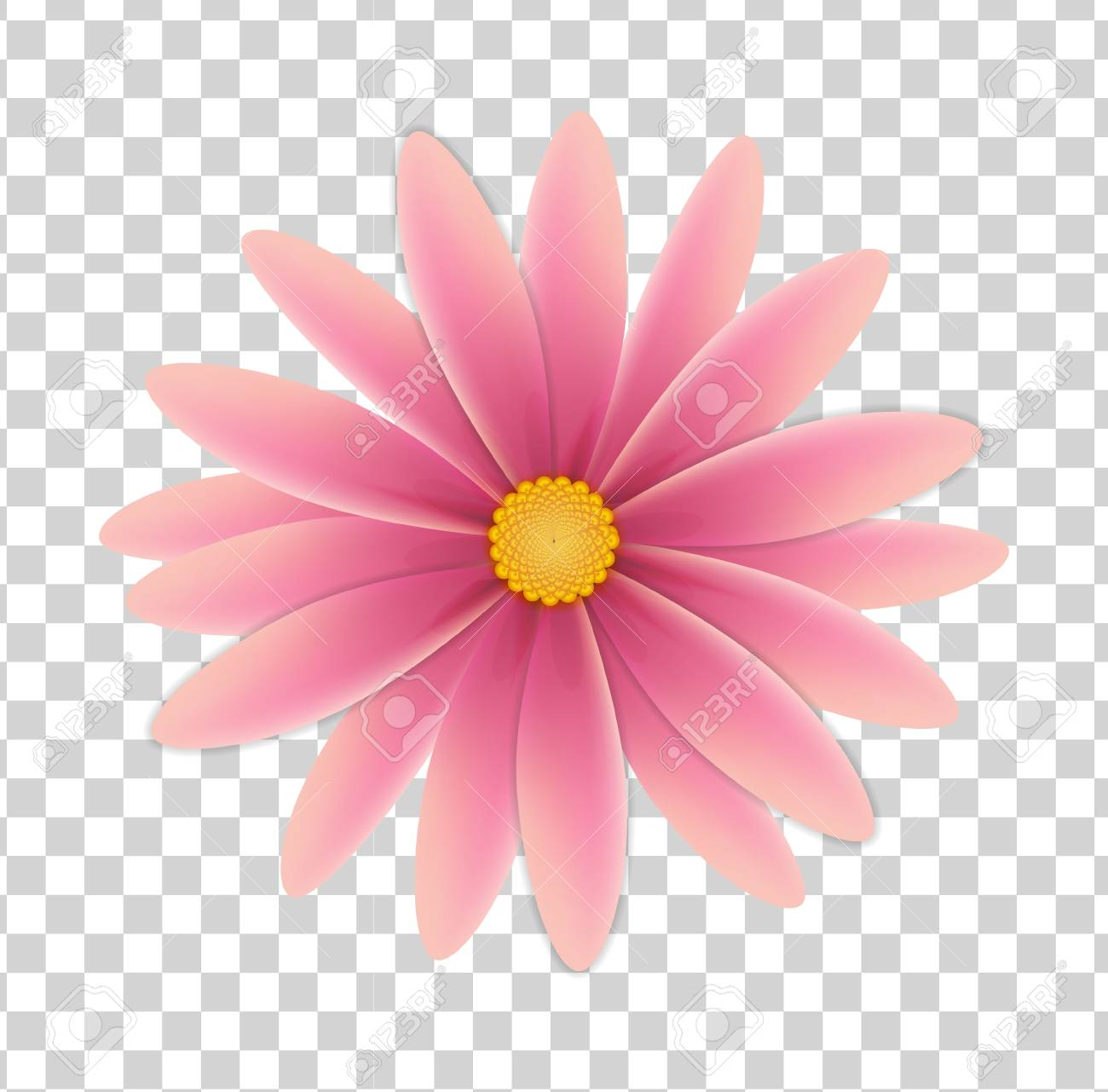 Simple Flower Of Pink Colors On A Transparent Background
