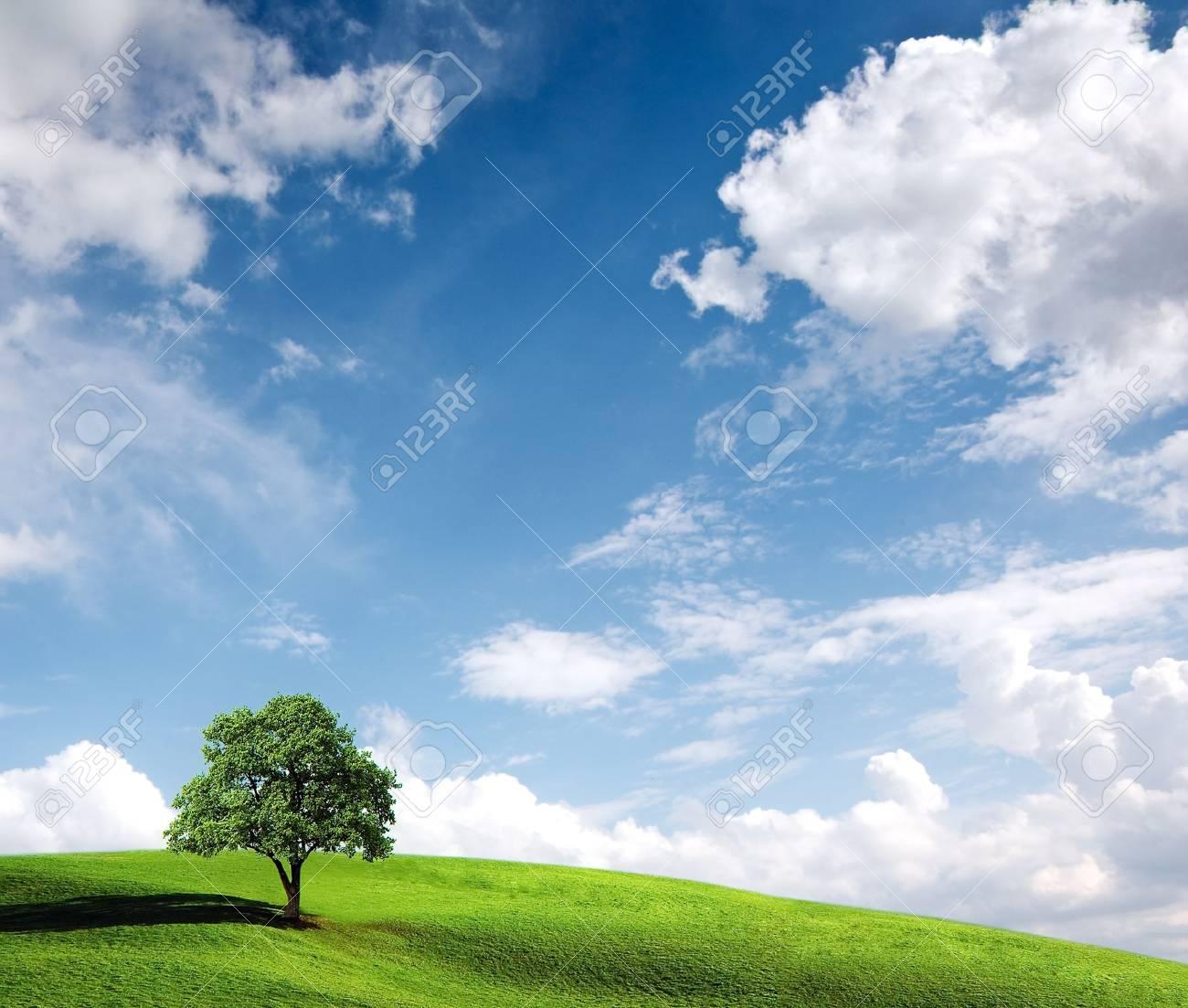 Idyllic summer landscape Stock Photo - 6988050