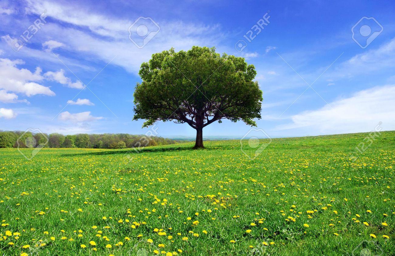 Beautiful spring landscape - 7787005