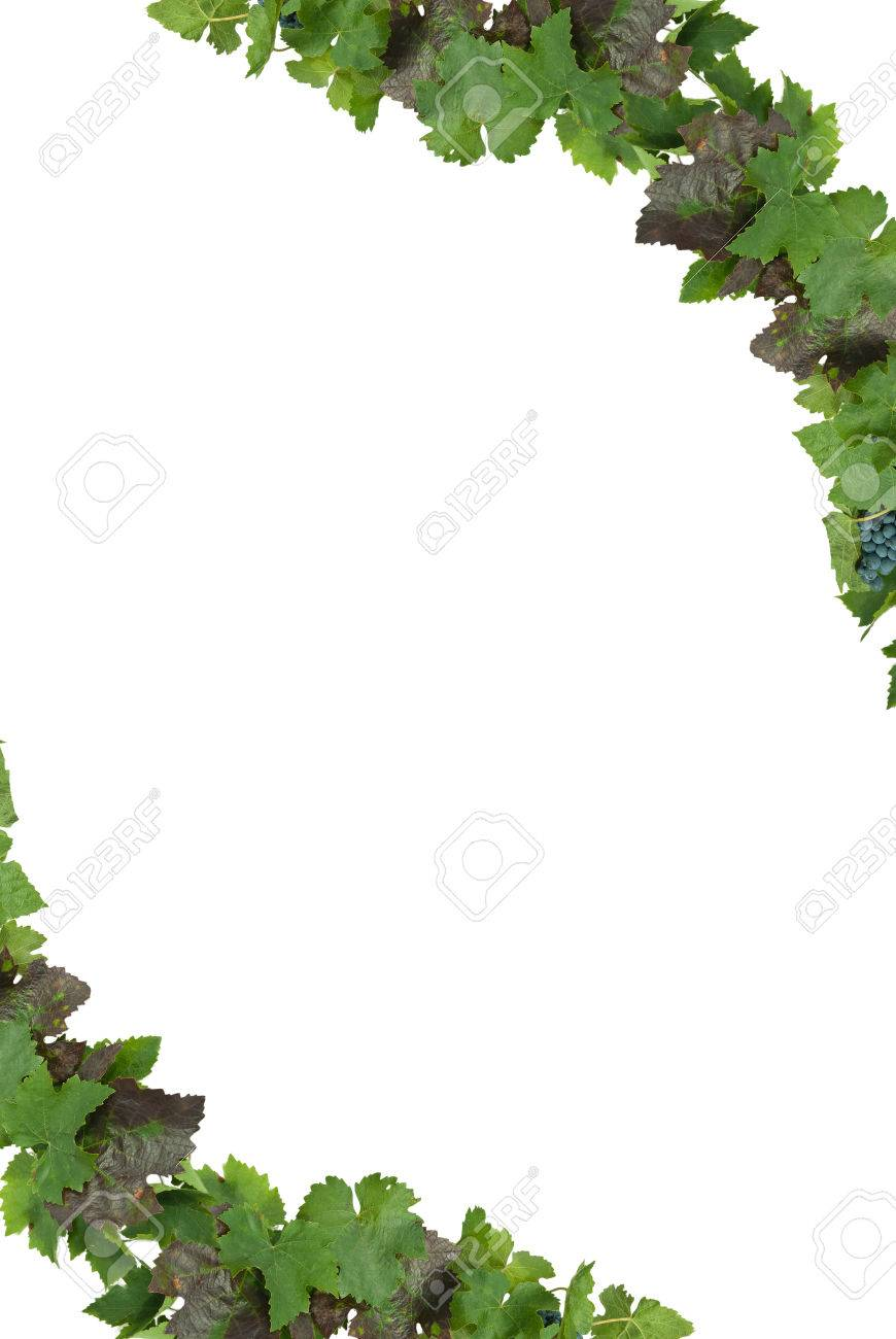 White frame with grapes and leaves of the vineyard. Stock Photo - 22425871