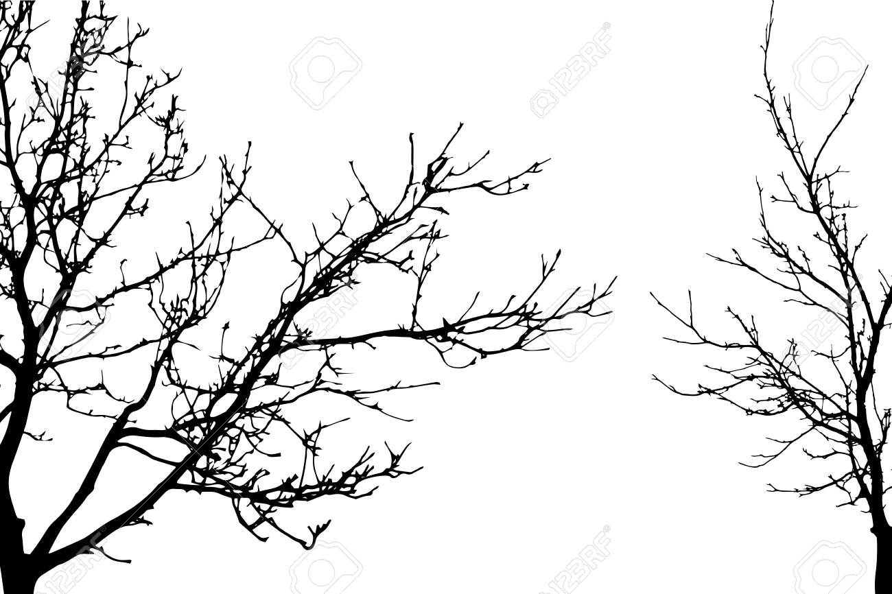 Vector silhouette of trees on white background. Symbol of forest. - 145078642