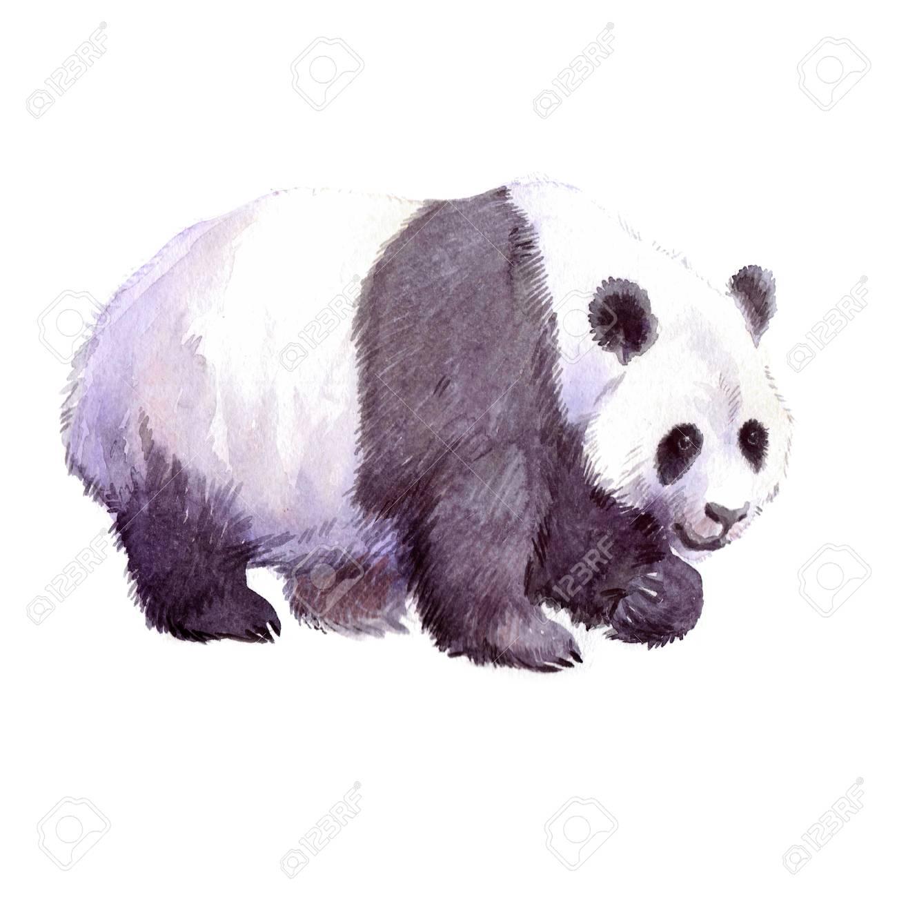 水彩のリアルなパンダ動物白背景イラストを分離しました